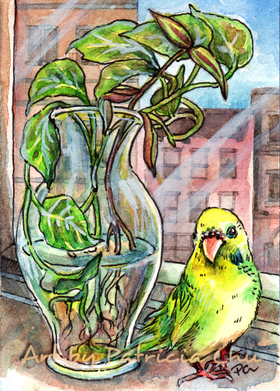 Budgie By The Window