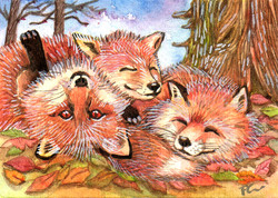 Foxes Play Time