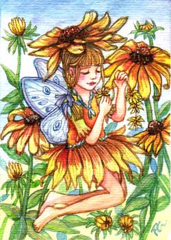 Black-eyed Susan Fairy