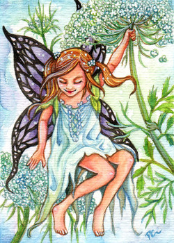 Queen Annes Lace Fairy