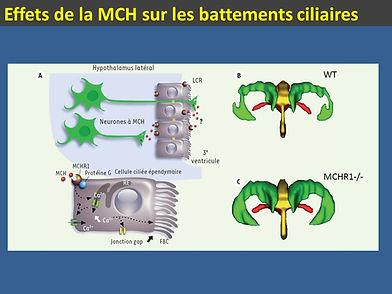 MCH et cils.jpg