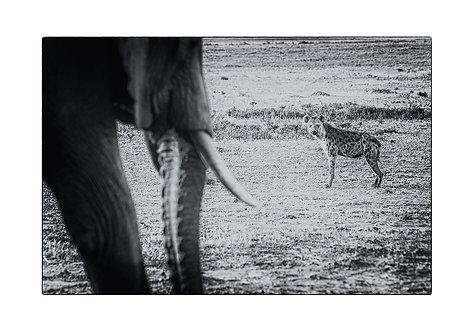 EOK_Wildlife_e96