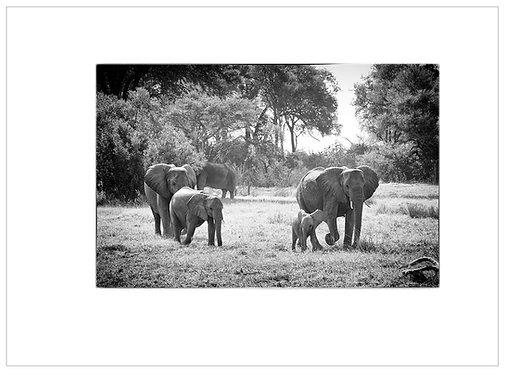 EOK_Wildlife_MM049