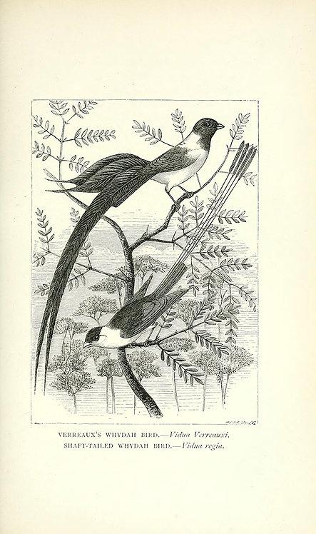Birds_A4003
