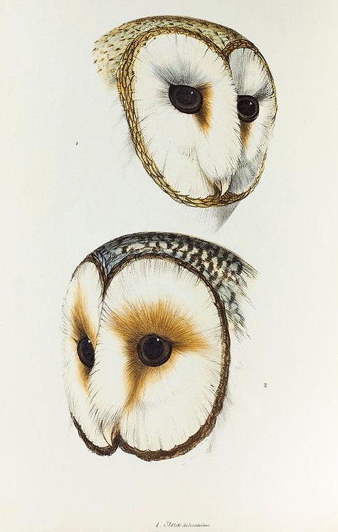 Birds_A3028