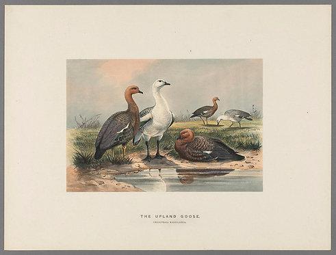 Birds_A4022
