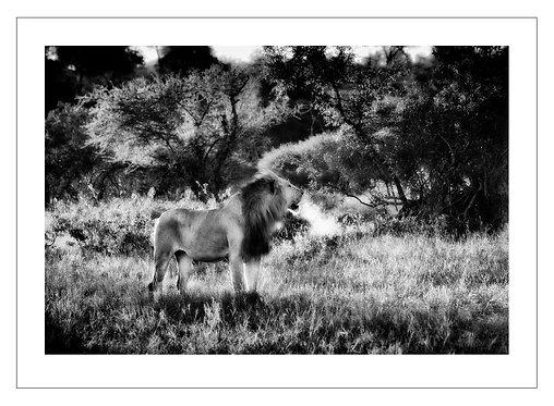 EOK_Wildlife_e26