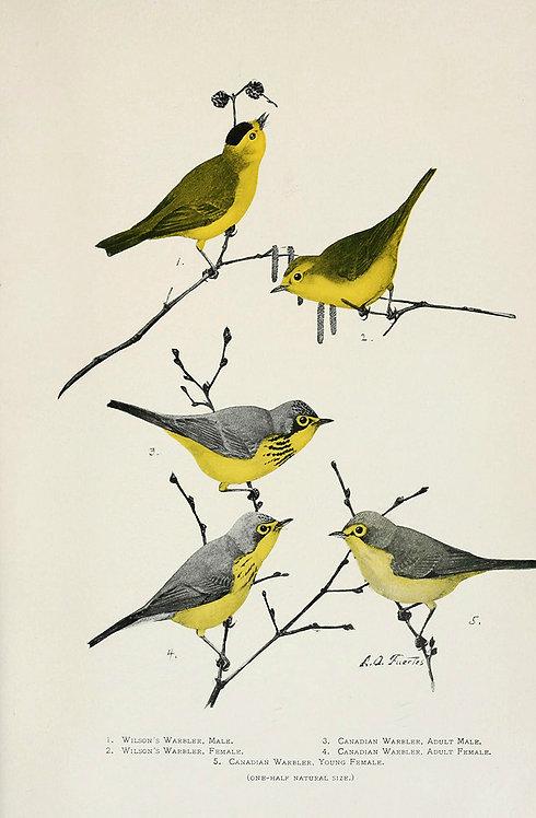 Birds_A2001