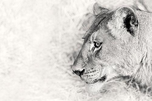 EOK_Wildlife_e42