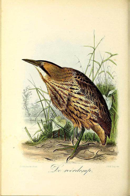Birds_A4029