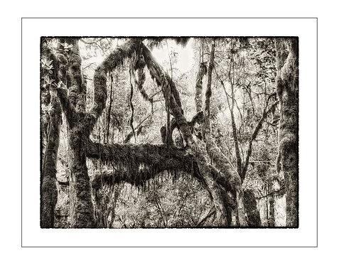 TreesOfKili_A0029