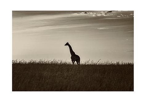 EOK_Wildlife_e107