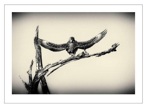 EOK_Wildlife_e27