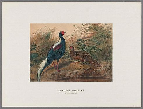 Birds_A4018