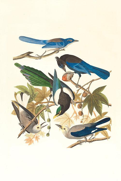 Birds_A0002