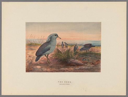 Birds_A4023