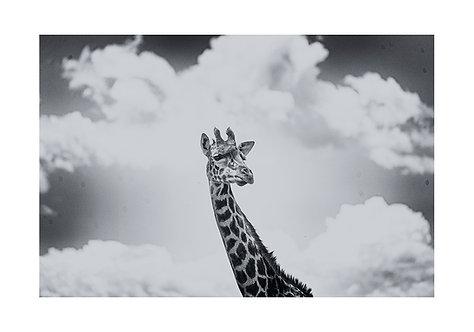 EOK_Wildlife_e112