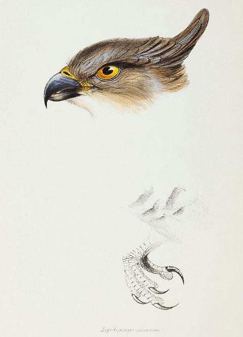 Birds_A3034