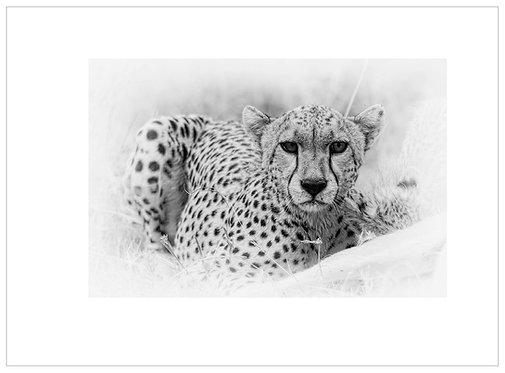 EOK_Wildlife_MM035