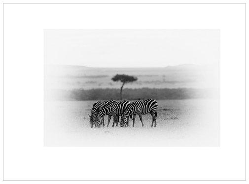 EOK_Wildlife_MM037