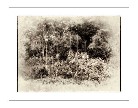 TreesOfKili_A0009