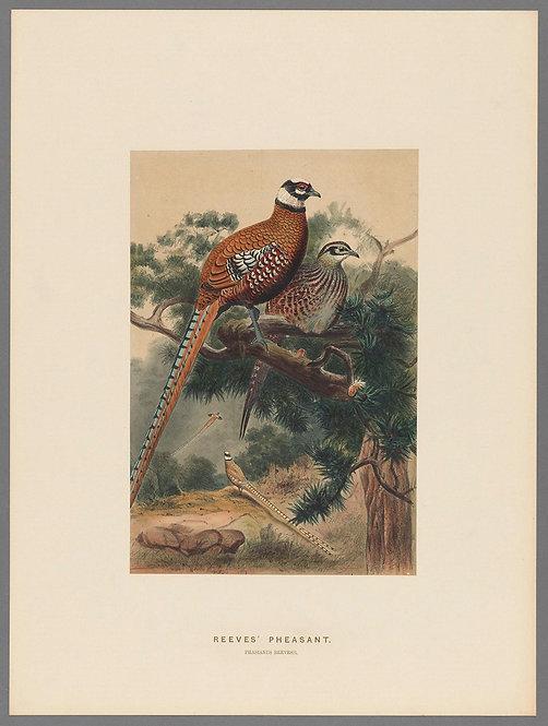 Birds_A4027