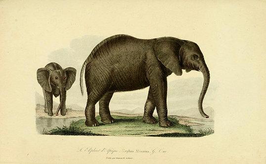 Mammals_A4007