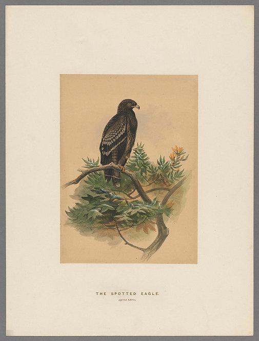 Birds_A4019