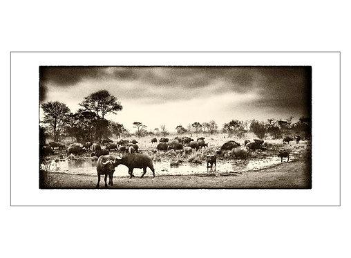 EOK_Wildlife_e20