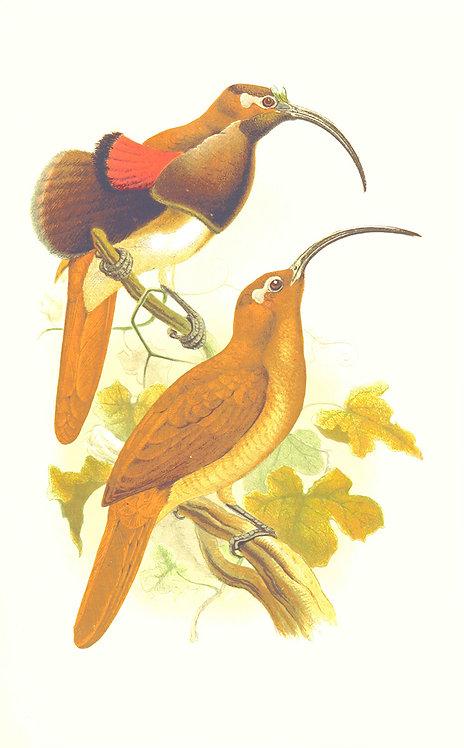 Birds_A0003