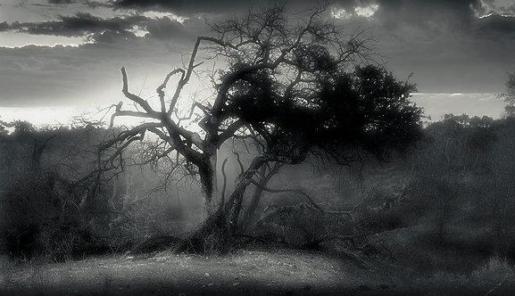 EOK_Landscapes_e52