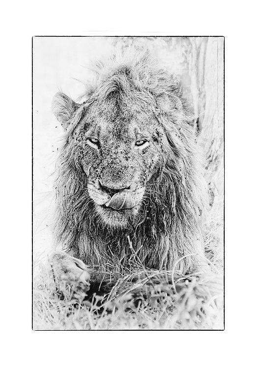 EOK_Wildlife_e129
