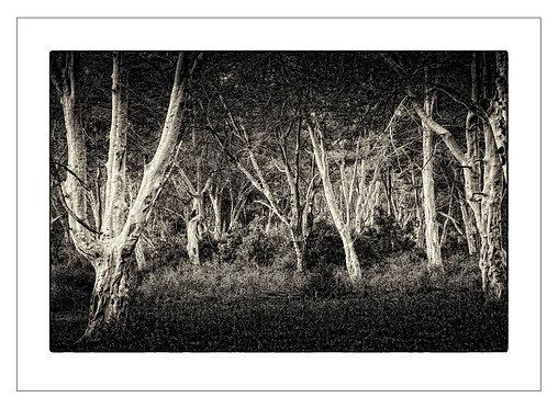 EOK_Landscapes_e04