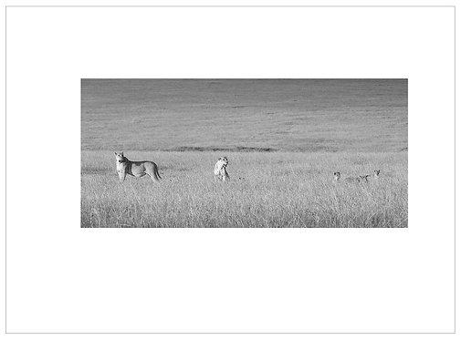 EOK_Wildlife_MM034