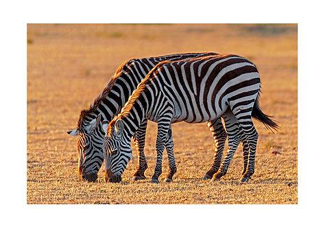 EOK_Wildlife_e97