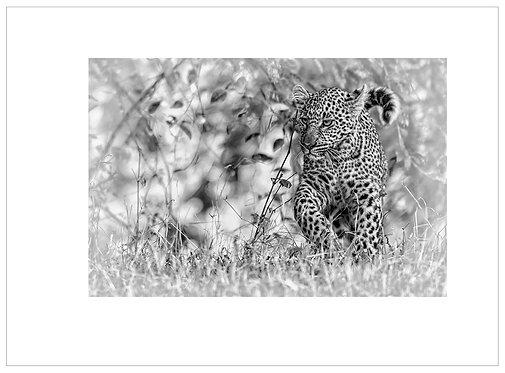 EOK_Wildlife_MM023