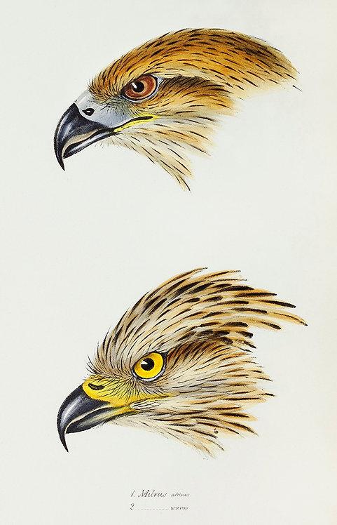 Birds_A3033