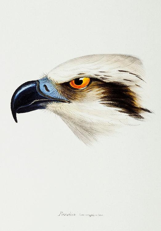 Birds_A3035