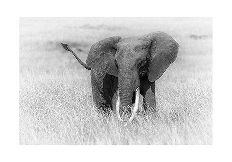 EOK_Wildlife_e86