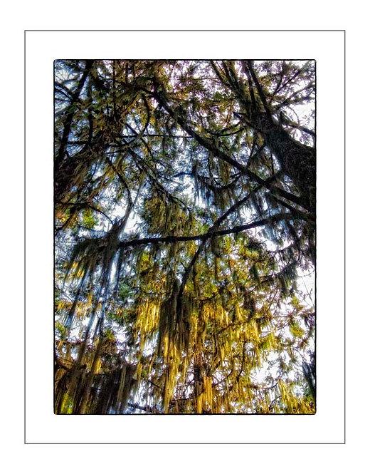 TreesOfKili_A0004