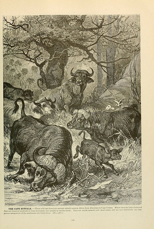 Mammals_A3014