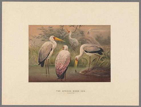 Birds_A4026