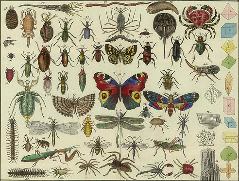 Insects/Reptiles_A4049