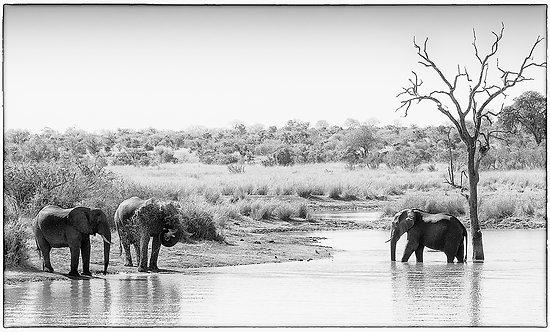 EOK_Wildlife_e57