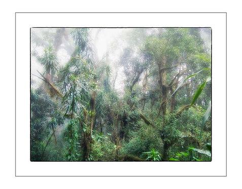 TreesOfKili_A0028