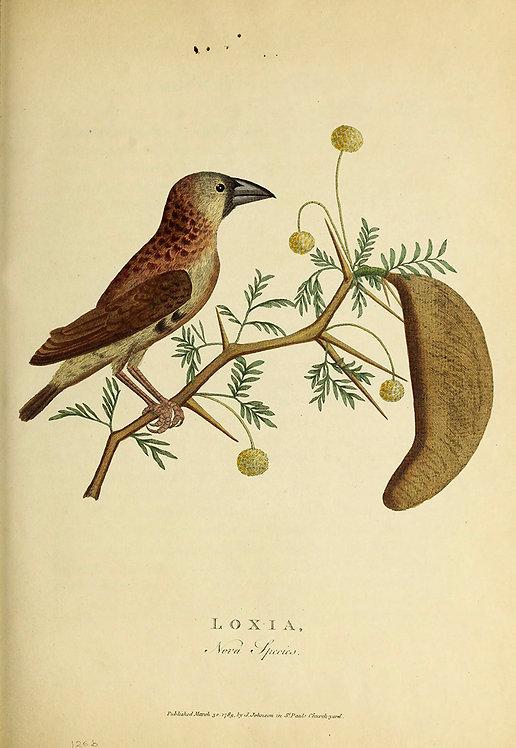 Birds_A4001