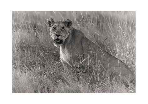 EOK_Wildlife_e84