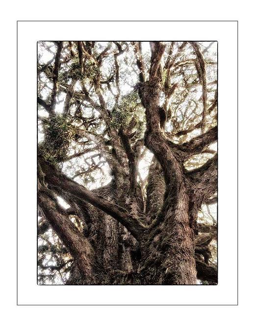 TreesOfKili_A0007