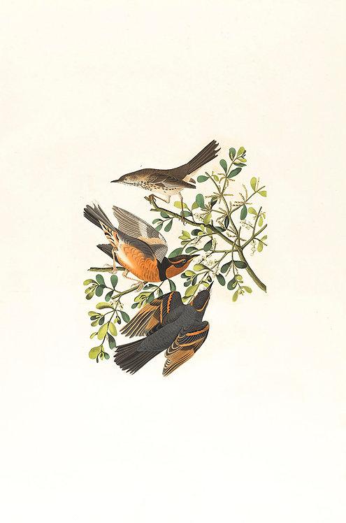 Birds_A0001