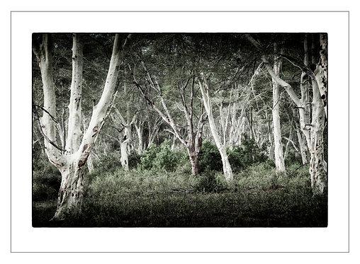 EOK_Landscapes_e05